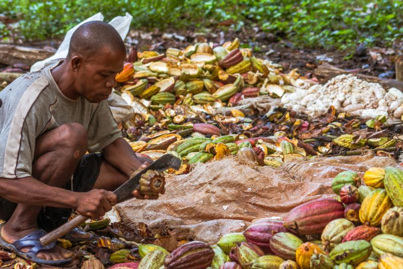 Chocolate companies must create a sustainable supply chain. (Credit: Pierre-Yves Babilon/Shutterstock)